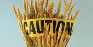 Talking Biotech: Is modern wheat breeding to blame for celiac disease and gluten sensitivity?