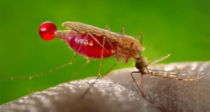 Gene drives: Why the best option for fighting mosquito-borne diseases is the 'mosquito itself'