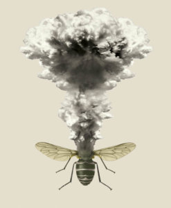 Latest ecological fake news scare: Like the 'honeybee armageddon' narrative, pesticide-driven 'insect-pocalypse' claim is collapsing
