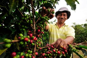 Podcast: 'Coffee footprint': What does it take to grow the 2.6 billion pounds of coffee we drink?