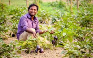 Podcast: Bt eggplant in Bangladesh—the GMO crop that boosted farmer profits 6-fold
