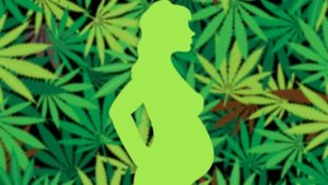 How a 'dubious' 50-year-old study fuels marijuana use by pregnant women—against the advice of health experts