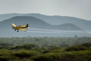 Africa cracks down on ravenous locust swarms by ignoring Greenepeace's anti-pesticide rhetoric